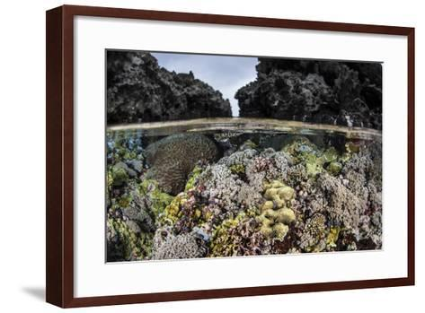 A Colorful Coral Reef Grows in Shallow Water in the Solomon Islands-Stocktrek Images-Framed Art Print