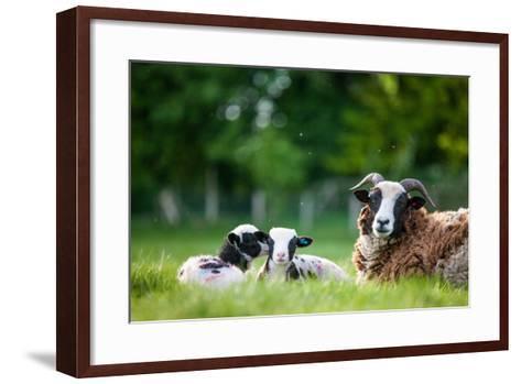 Spring Lambs, Dorset, England, United Kingdom, Europe-John Alexander-Framed Art Print