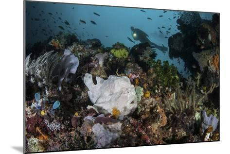 A Giant Frogfish Blends into its Reef Surroundings in Indonesia-Stocktrek Images-Mounted Photographic Print