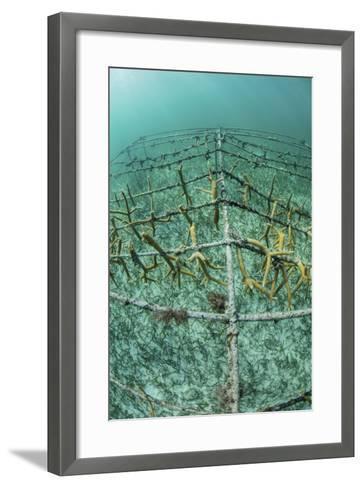 Fast-Growing Corals Being Grown in the Caribbean Sea-Stocktrek Images-Framed Art Print