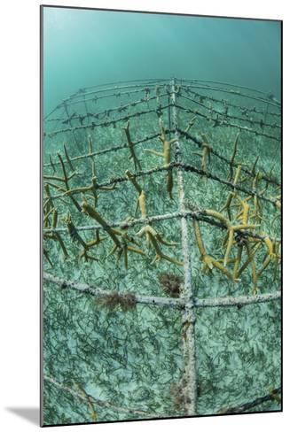 Fast-Growing Corals Being Grown in the Caribbean Sea-Stocktrek Images-Mounted Photographic Print