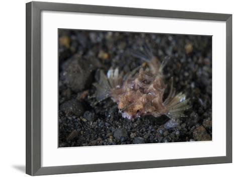 A Dragon Seamoth Crawls across the Sandy Seafloor-Stocktrek Images-Framed Art Print