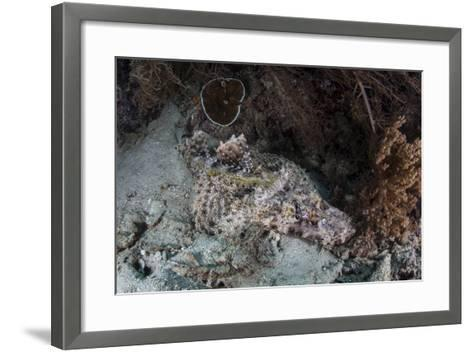 A Crocodilefish Lies on a Reef in Indonesia-Stocktrek Images-Framed Art Print