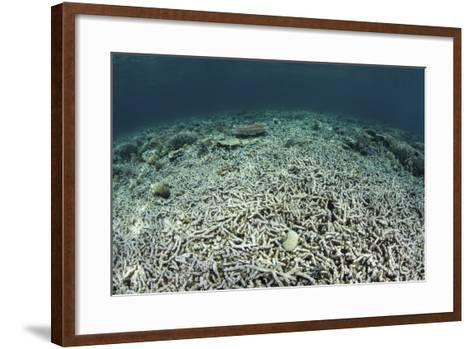 A Coral Reef Has Been Destroyed in Indonesia-Stocktrek Images-Framed Art Print