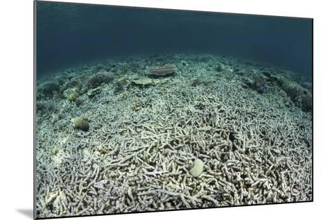 A Coral Reef Has Been Destroyed in Indonesia-Stocktrek Images-Mounted Photographic Print