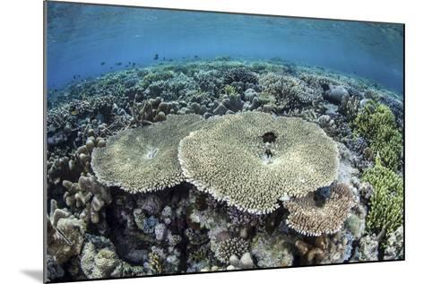 A Diverse Array of Corals Grow in Raja Ampat, Indonesia-Stocktrek Images-Mounted Photographic Print