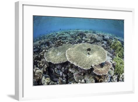 A Diverse Array of Corals Grow in Raja Ampat, Indonesia-Stocktrek Images-Framed Art Print
