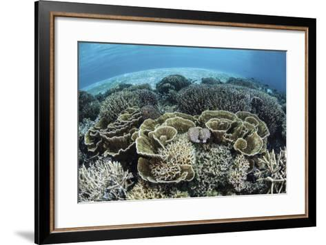 Delicate Reef-Building Corals in Alor, Indonesia-Stocktrek Images-Framed Art Print