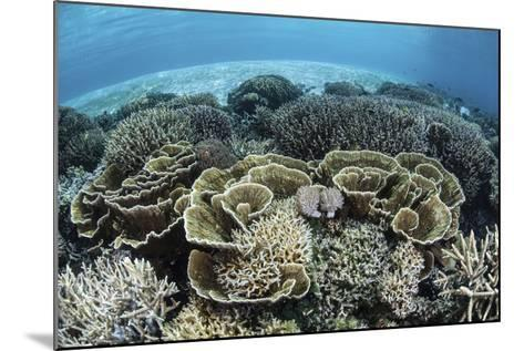 Delicate Reef-Building Corals in Alor, Indonesia-Stocktrek Images-Mounted Photographic Print