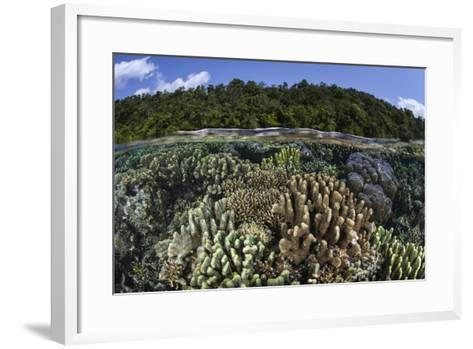 A Diverse Array of Reef-Building Corals in Raja Ampat, Indonesia-Stocktrek Images-Framed Art Print