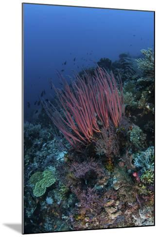 A Colony of Sea Whips Grows on a Coral Reef in Indonesia-Stocktrek Images-Mounted Photographic Print