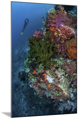 A Diver Hovers Above a Colorful Coral Reef-Stocktrek Images-Mounted Photographic Print