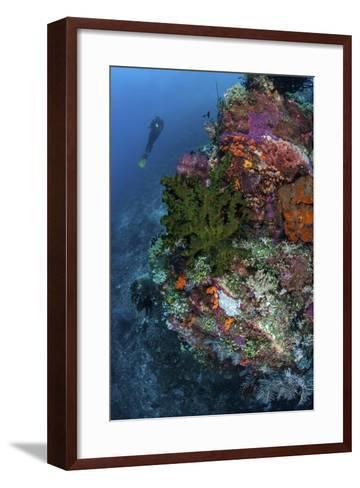 A Diver Hovers Above a Colorful Coral Reef-Stocktrek Images-Framed Art Print