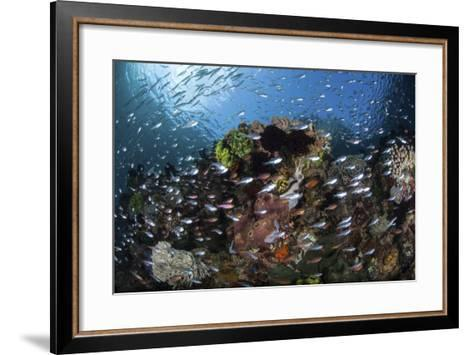 A Colorful Coral Reef Is Covered by Fish in Indonesia-Stocktrek Images-Framed Art Print