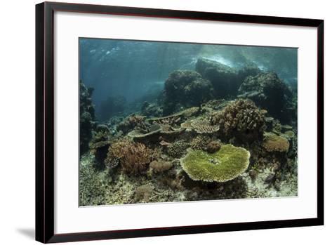 Healthy Reef-Building Corals Thrive in Komodo National Park, Indonesia-Stocktrek Images-Framed Art Print