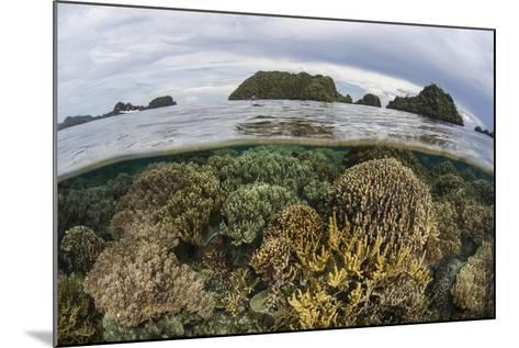 Fragile Corals Grow in Shallow Water in Raja Ampat, Indonesia-Stocktrek Images-Mounted Photographic Print