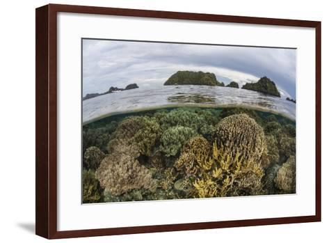 Fragile Corals Grow in Shallow Water in Raja Ampat, Indonesia-Stocktrek Images-Framed Art Print