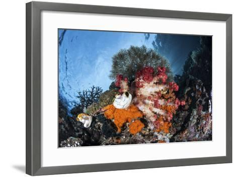 Colorful Soft Corals Grow on a Reef Dropoff in Raja Ampat-Stocktrek Images-Framed Art Print