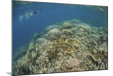 A Snorkeler Explores a Healthy Coral Reef in Palau's Lagoon-Stocktrek Images-Mounted Photographic Print