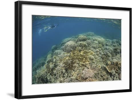 A Snorkeler Explores a Healthy Coral Reef in Palau's Lagoon-Stocktrek Images-Framed Art Print