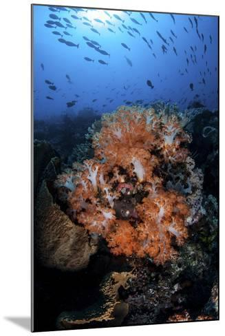 Beautiful Orange Soft Corals on a Current-Swept Reef in Indonesia-Stocktrek Images-Mounted Photographic Print