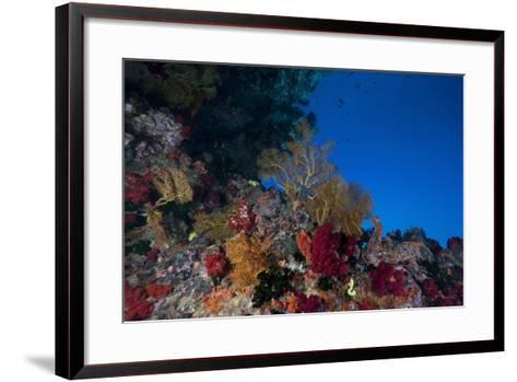 Soft Corals and Gorgonian Sea Fans Adorn a Reef in Fiji-Stocktrek Images-Framed Art Print