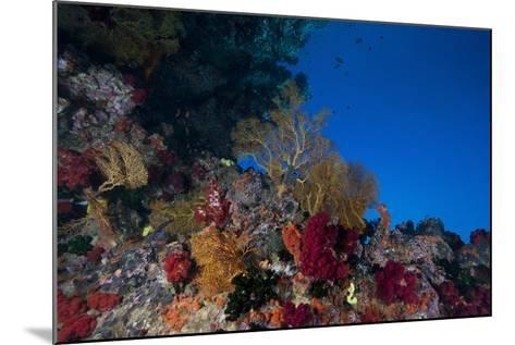 Soft Corals and Gorgonian Sea Fans Adorn a Reef in Fiji-Stocktrek Images-Mounted Photographic Print