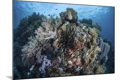 A Diverse Array of Invertebrates Cover a Healthy Reef in Indonesia-Stocktrek Images-Mounted Photographic Print