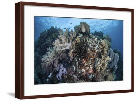 A Diverse Array of Invertebrates Cover a Healthy Reef in Indonesia-Stocktrek Images-Framed Art Print