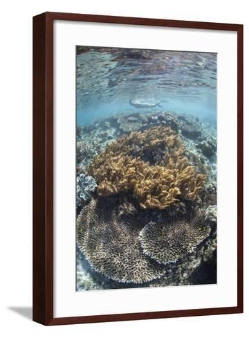 A Snorkeler Explores a Shallow Lagoon in Raja Ampat-Stocktrek Images-Framed Art Print