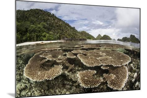 Corals Grow on a Shallow Reef in Raja Ampat, Indonesia-Stocktrek Images-Mounted Photographic Print