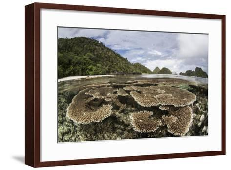Corals Grow on a Shallow Reef in Raja Ampat, Indonesia-Stocktrek Images-Framed Art Print