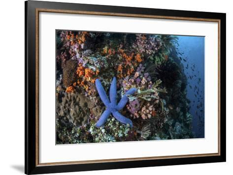 A Blue Starfish Clings to a Reef in Komodo National Park, Indonesia-Stocktrek Images-Framed Art Print