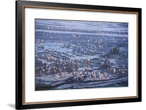 Thousands of Flamingos at Laguna Colorada, Bolivia-Matthew Williams-Ellis-Framed Art Print