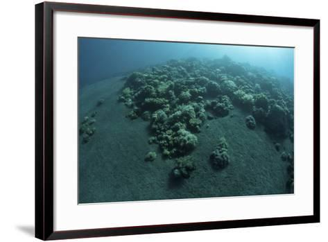 Corals Encroach on a Black Sand Slope in Komodo National Park, Indonesia-Stocktrek Images-Framed Art Print