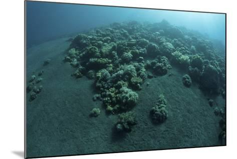 Corals Encroach on a Black Sand Slope in Komodo National Park, Indonesia-Stocktrek Images-Mounted Photographic Print