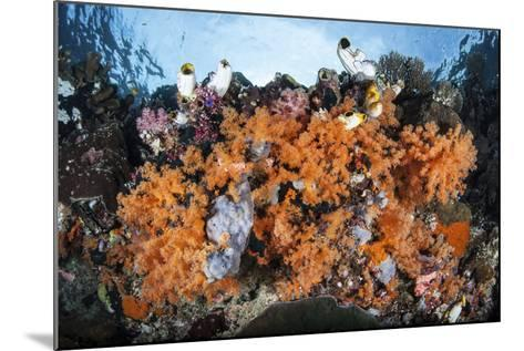 Colorful Soft Corals Grow on a Reef Dropoff in Raja Ampat-Stocktrek Images-Mounted Photographic Print