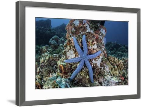 An Unusual Sea Star Clings to a Diverse Reef Near the Island of Bangka-Stocktrek Images-Framed Art Print