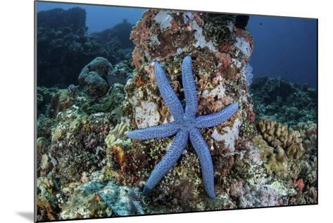 An Unusual Sea Star Clings to a Diverse Reef Near the Island of Bangka-Stocktrek Images-Mounted Photographic Print