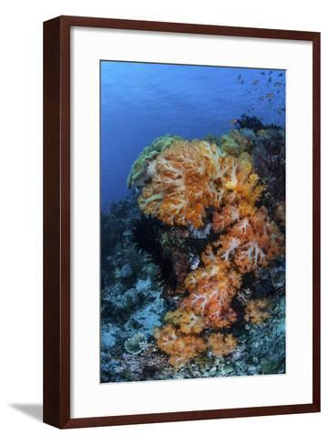 A Beautiful Cluster of Soft Coral on a Coral Reef in Indonesia-Stocktrek Images-Framed Art Print