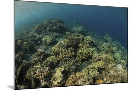 A Field of Soft Corals Grows on an Underwater Slope in Indonesia-Stocktrek Images-Mounted Photographic Print