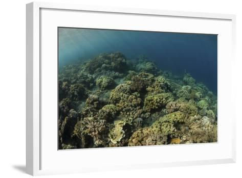 A Field of Soft Corals Grows on an Underwater Slope in Indonesia-Stocktrek Images-Framed Art Print