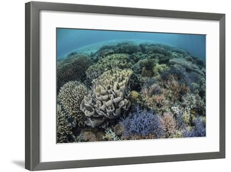 Colorful Corals Near the Island of Alor, Indonesia-Stocktrek Images-Framed Art Print