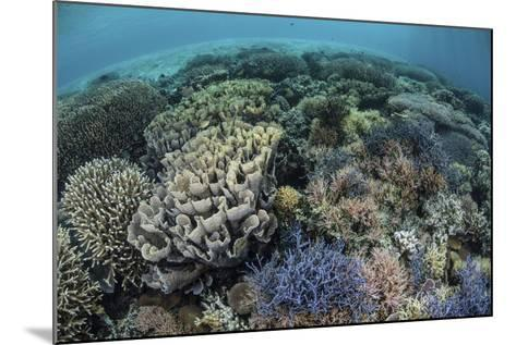 Colorful Corals Near the Island of Alor, Indonesia-Stocktrek Images-Mounted Photographic Print