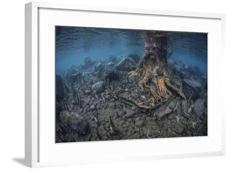 Mangrove Roots Rise from the Seafloor of an Island in Indonesia-Stocktrek Images-Framed Art Print