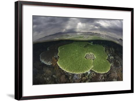 Sunlight Falls on a Beautiful Reef in Komodo National Park-Stocktrek Images-Framed Art Print