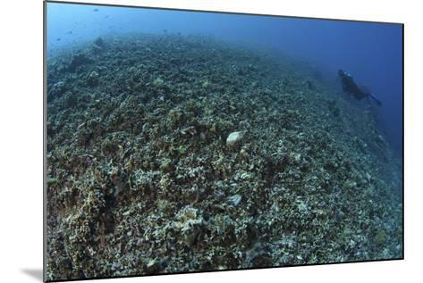 The Effects of Reef Bombing by Dynamite Fishermen, Komodo National Park, Indonesia-Stocktrek Images-Mounted Photographic Print
