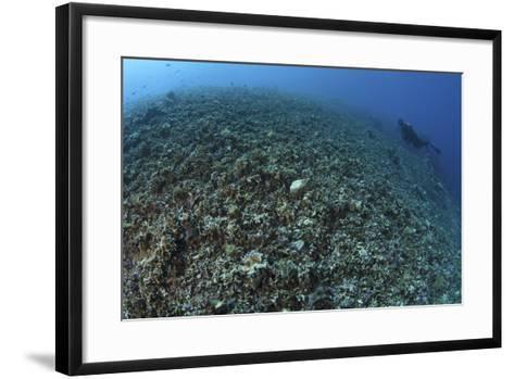 The Effects of Reef Bombing by Dynamite Fishermen, Komodo National Park, Indonesia-Stocktrek Images-Framed Art Print