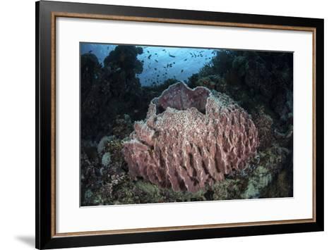 A Massive Barrel Sponge Grows N the Solomon Islands-Stocktrek Images-Framed Art Print