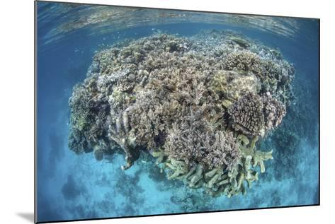 A Diverse Coral Reef Grows in Shallow Water in the Solomon Islands-Stocktrek Images-Mounted Photographic Print